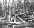 Cold deck and logging crew, Florence Logging Company, ca 1916 (KINSEY 141).jpeg