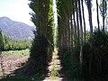 Coltauco, H-30. - panoramio - R.A.T.P. (15).jpg
