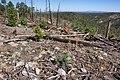 Continental Divide Trail, Black Range - Flickr - aspidoscelis (1).jpg