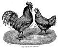 Coq et poule des Ardennes, La Perre De Roo 1882.jpg
