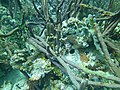 Coral Random Scene (7157435391).jpg