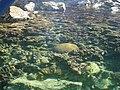 Corales, Parque Nacional Mochima.jpg