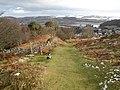 Corner of Coed Fridd - geograph.org.uk - 1150391.jpg