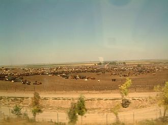 Xavier Rudd - View of Harris Ranch—the beef farm that inspired Rudd to change his diet and become a vegetarian
