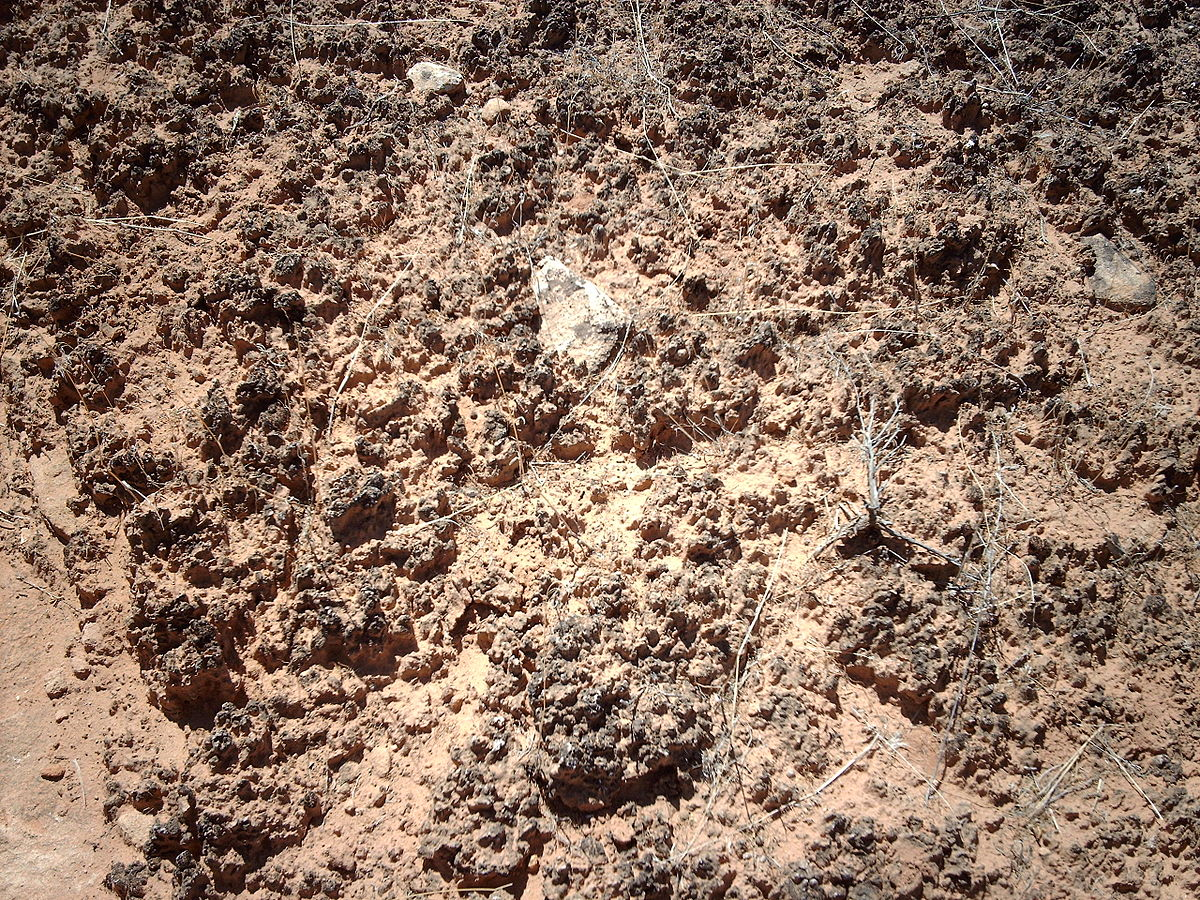 Biological soil crust wikipedia for Nature and composition of soil