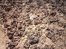 Biological soil crust wikipedia for Properties of soil wikipedia