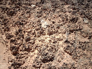 Biological soil crust - Biological soil crust in Hovenweep National Monument.