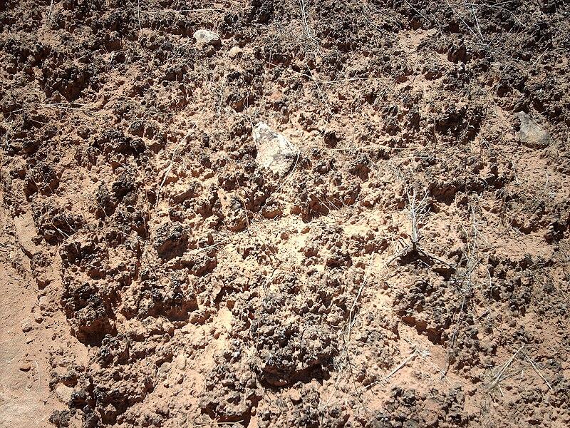 Cryptobiotic Soil