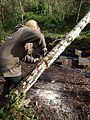 Cutting a fallen Birch in Gunnersbury Triangle.jpg