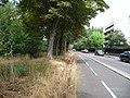 Cycleway - Avenue de la Belle Gabrielle - Fontenay-sous-Bois.jpg