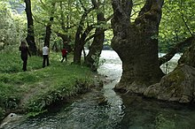 A group of hikers walking along a river among Platanus orientalis trees