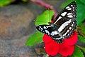 DGJ 4096 - Bye Orchid and Butterfly Farm (3719293327).jpg