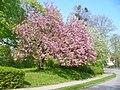 Dahlem - Fruehling (Springtime) - geo.hlipp.de - 35930.jpg