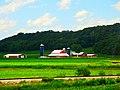Dairy Farm with Three Silos - panoramio (1).jpg