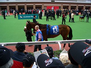Darjina French Thoroughbred racehorse