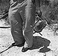 De gevangen schildpad wordt vervoerd, Bestanddeelnr 252-5953.jpg