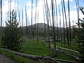 Dead Trees Along Trail to Fairy Falls DyeClan.com - panoramio.jpg