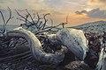 """Dead tree '"""" the serpent"""".jpg"""
