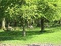 Deer - geograph.org.uk - 493627.jpg