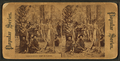 Deer hunters' camp in in Florida, from Robert N. Dennis collection of stereoscopic views.png