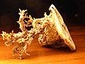 Dehydrierte Kartoffelhälfte.jpg