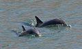 Delfines-gijon-4.jpg