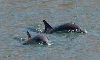 Delfines-gijon-4
