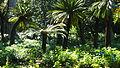 Des espèces d'arbre au jardin d'essai à Alger.JPG