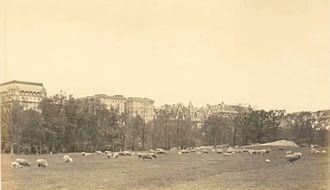 Sheep Meadow - Grazing sheep