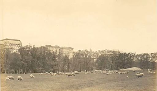 Detail Thaddeus Wilkerson Postcard Sheep Fold Central Park NY