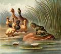 Discontentedfrogs-12.png
