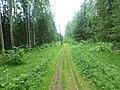 Dobryanskiy r-n, Permskiy kray, Russia - panoramio (186).jpg