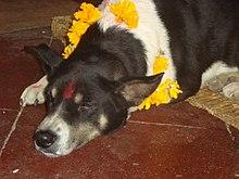 Dogs in religion - Wikipedia