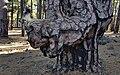 Dog tree (31990019975).jpg