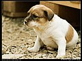 Dogs (5080844247).jpg