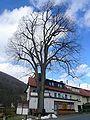 Dorflinde in Riedenberg.jpg