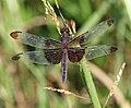 Dragonfly (2787304600).jpg