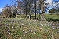 Drebacher Krokuswiesen 2H1A4697WI.jpg