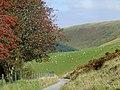 Drover's road at Nant-y-Stalwyn, Cwm Tywi, Powys - geograph.org.uk - 1501543.jpg