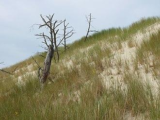 Słowiński National Park - Image: Dune in Słowiński National Park 01