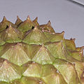 Durian husk with thorns.jpg
