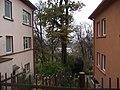 E. Fryko str. - panoramio (1).jpg