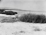 ETH-BIB-Ufer eines Sees-Kilimanjaroflug 1929-30-LBS MH02-07-0589.tif