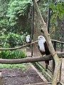 Eagle eye2995.jpg