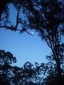 Early morning moon - panoramio.jpg