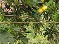 Ecuador Hummingbird blue 6347.jpg