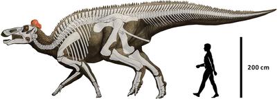 Edmontosaurus regalis.PNG