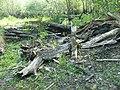Ekopark - Wschodni w Kołobrzegu (czerwiec 2010) - panoramio (2).jpg