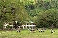El Nido Elementary Schoolyard - panoramio.jpg