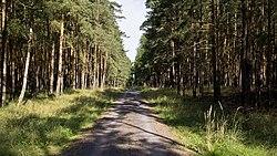 Elberadweg zwischen Badetz und Steckby.jpg